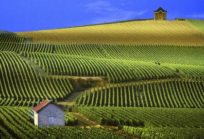 46-48 millió hektoliter borra számítanak Franciaországban
