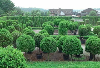 Különleges alkalmakra bérelhető, százéves növények  a Laurica Plants bemutatókertjében