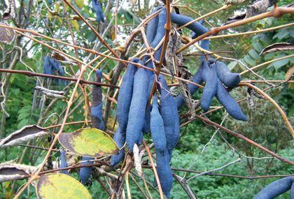 Hamvas, bibircses termései legtöbbször  a kék árnyalataiban érnek