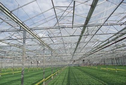 A nyári termesztés megkönnyítése érdekében a szokásosnál nagyobb a szellőzőfelület a házakon