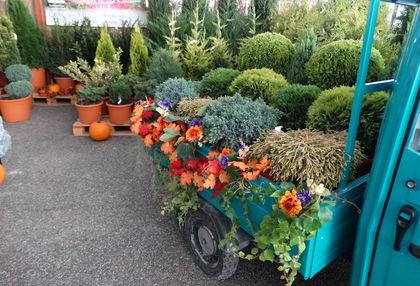 A Örökzöld Kertészet őszi ihletésű standja