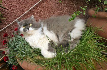 macska erkélyen