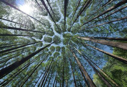 Peter Wohlleben szerint a fák beszélgetnek