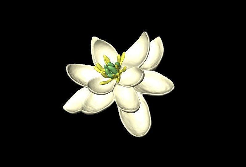 virágok biológiai szempontból