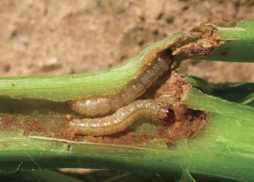 protozoon parazita