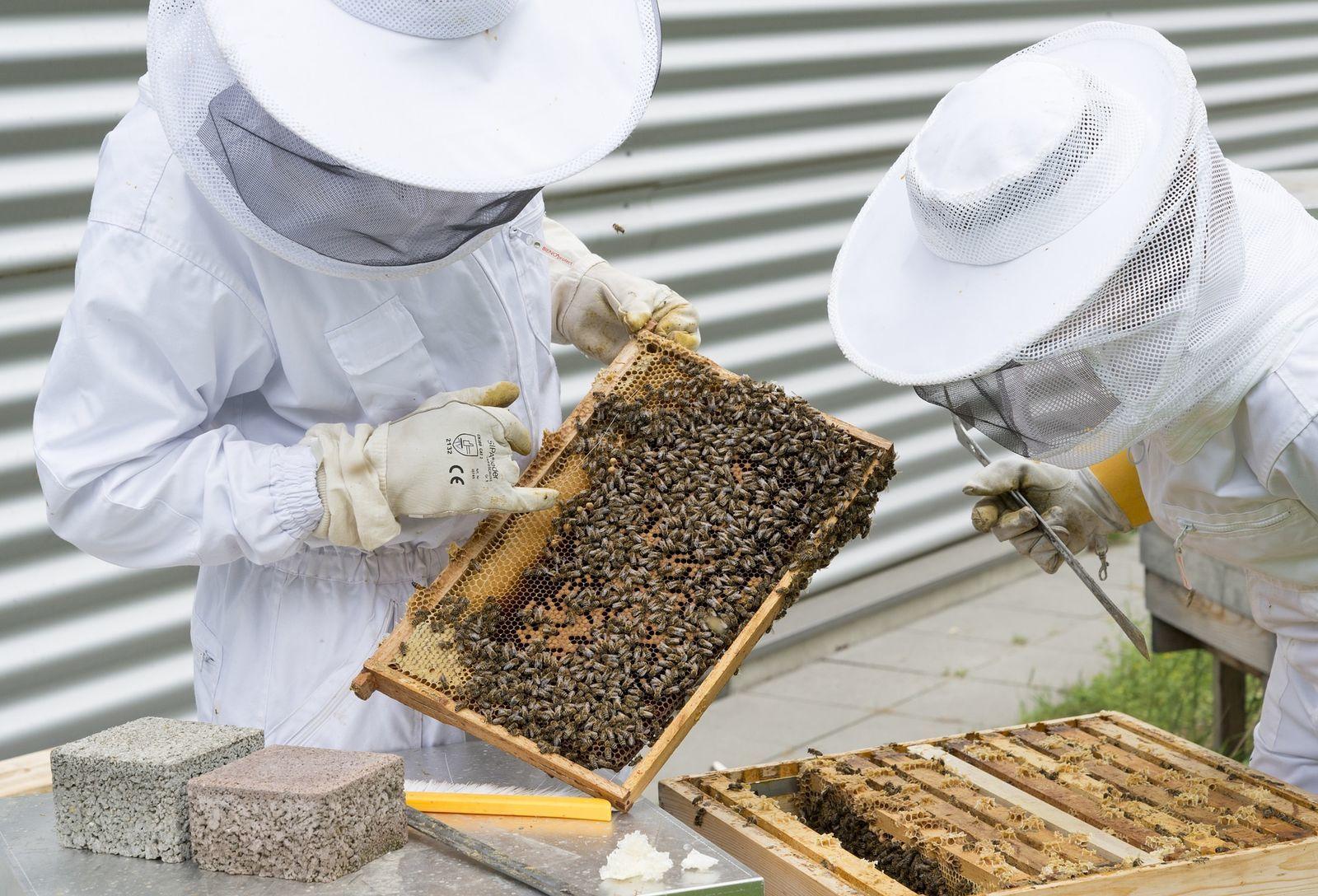 pikkelysömör kezelése méhészeti termékekkel