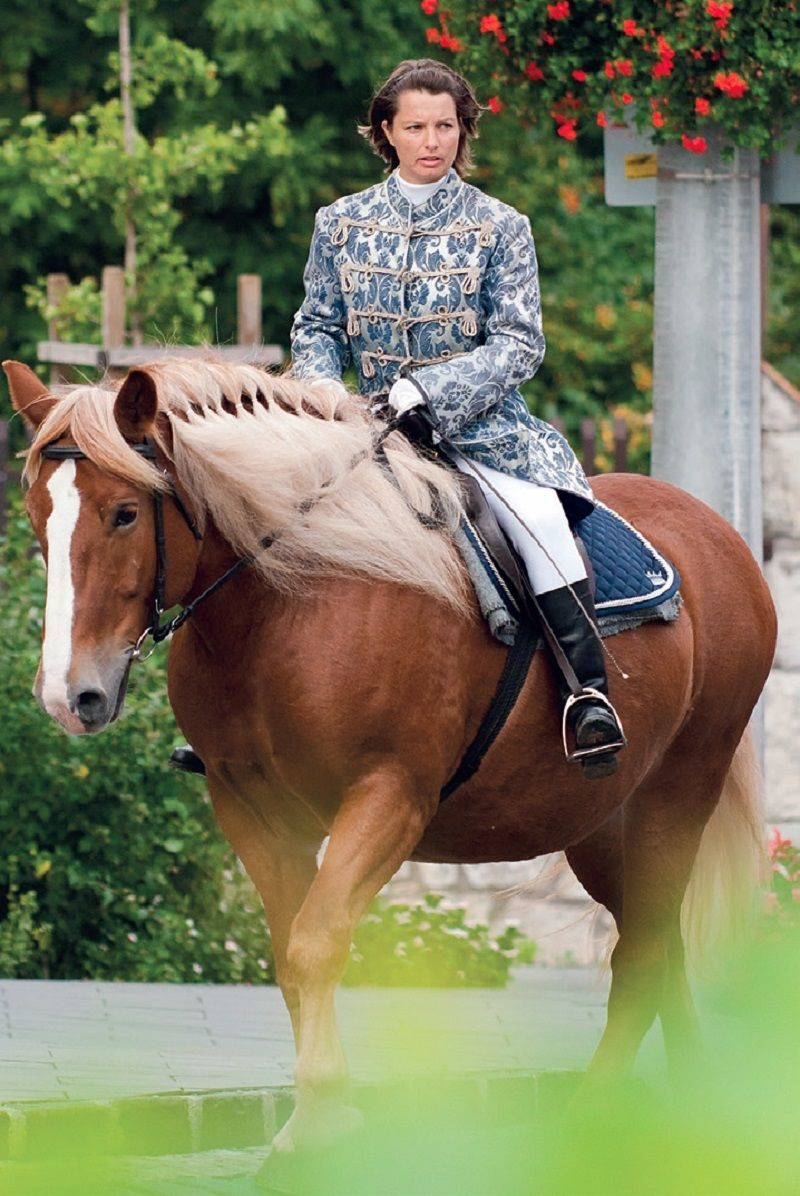 kenőcs lovak számára ízületekből