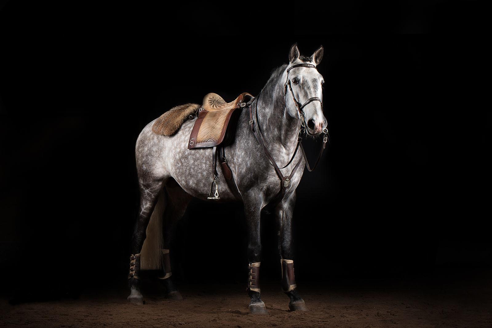 jött lovas egyetlen fő formája)