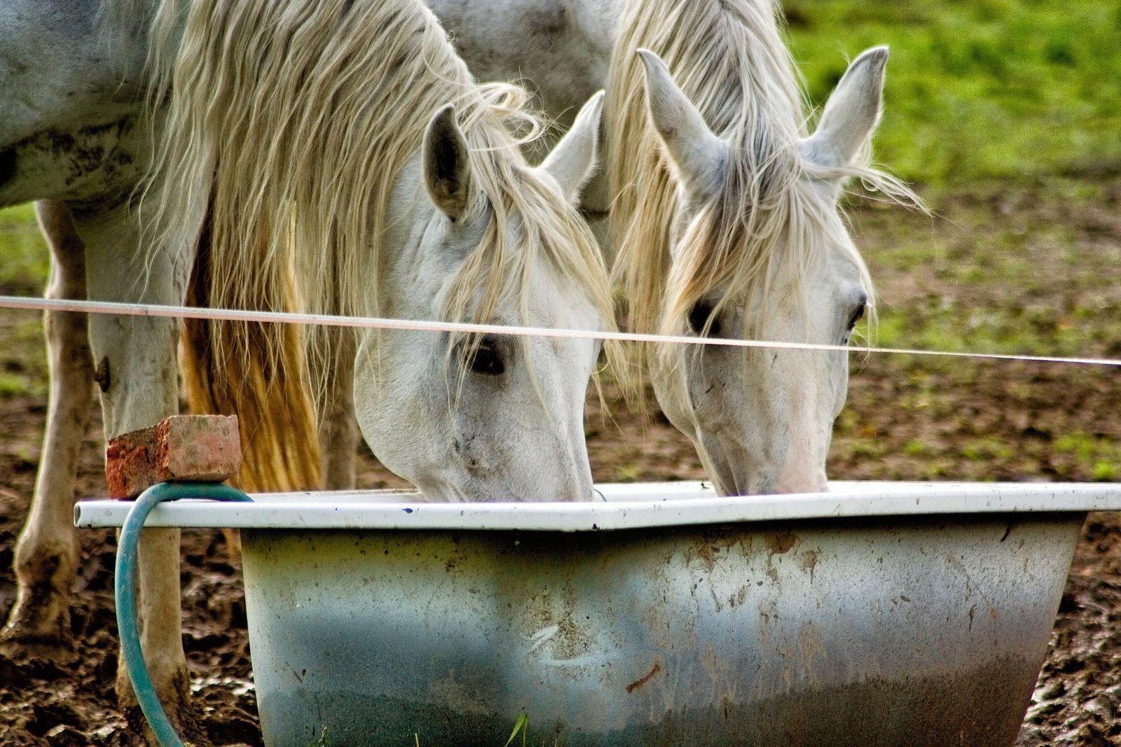 közös kenőcs lovak számára ízületi gyulladások kezelésének módszerei