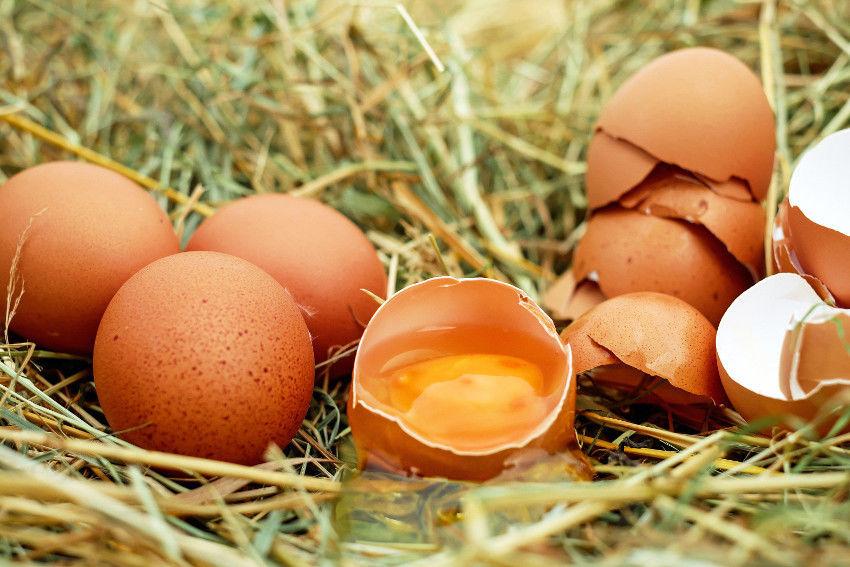 A tojáshéj az új csodaszer – csontjaink és ízületeink megmentője | Ridikül