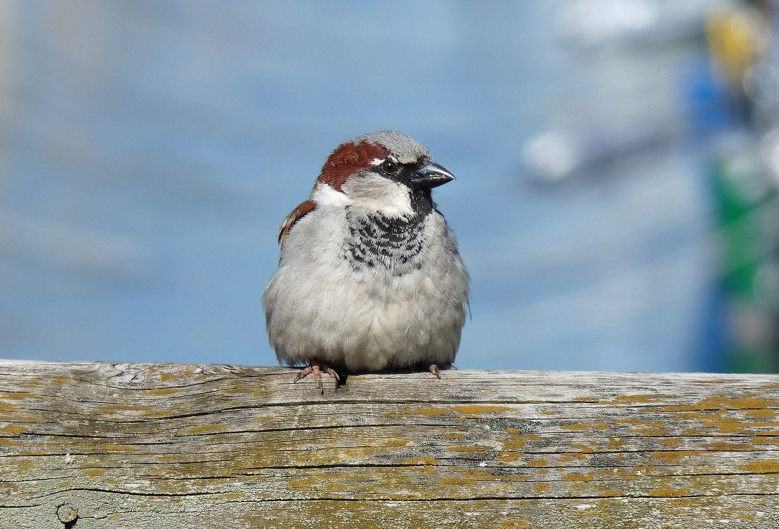 Aggasztóan csökken a madarak állománya Magyarországon