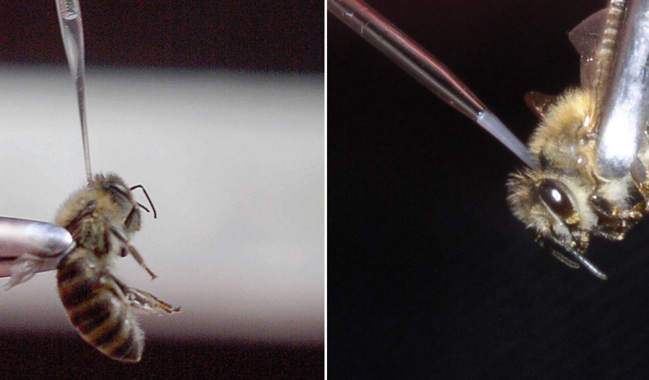Megszúrt egy méh a péniszemben)
