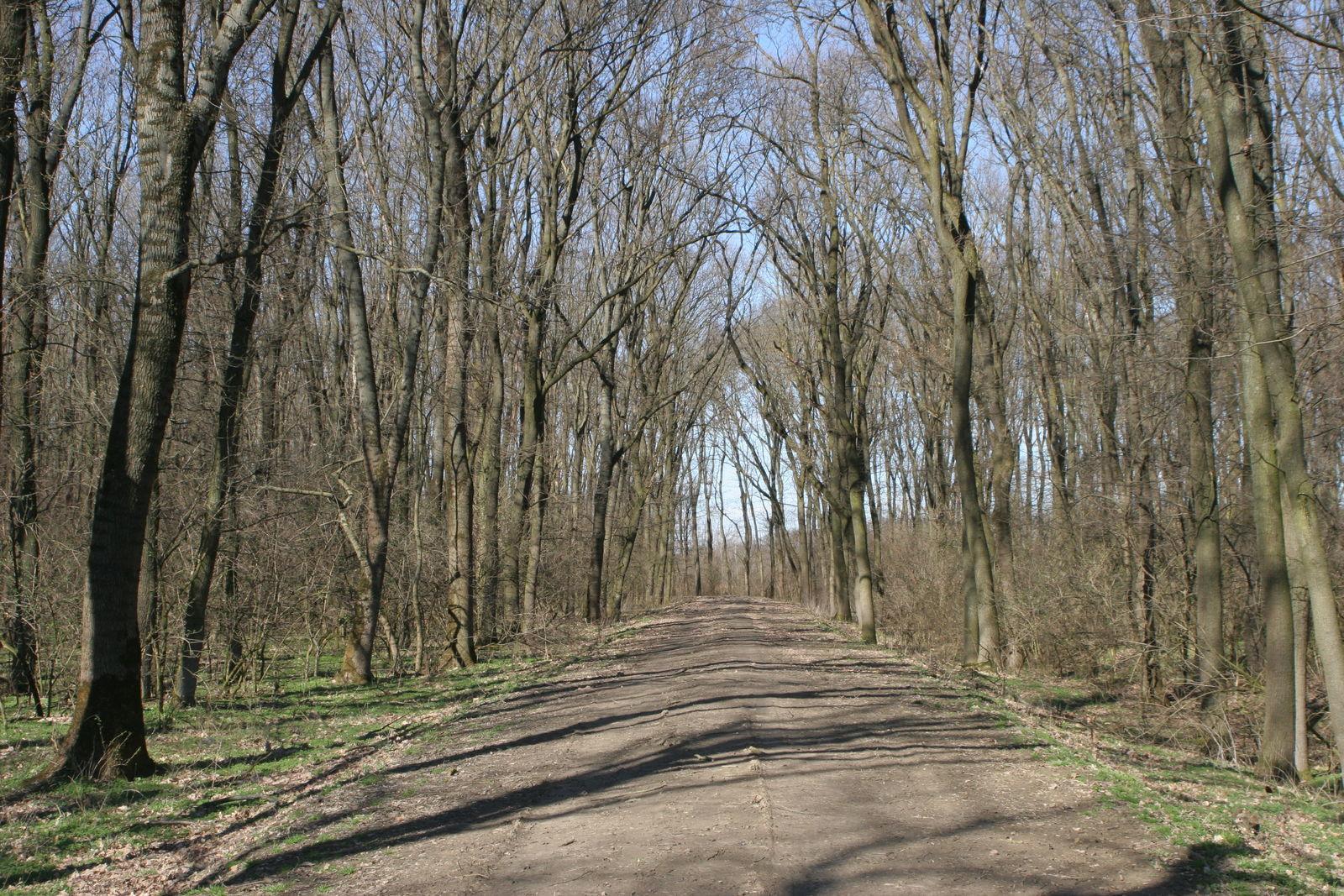 Évszázados erdei töltés a sebesfoki erdőben