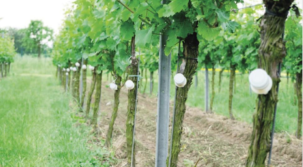 Egyesek a fungiciddepó elhelyezésében látják a megoldást