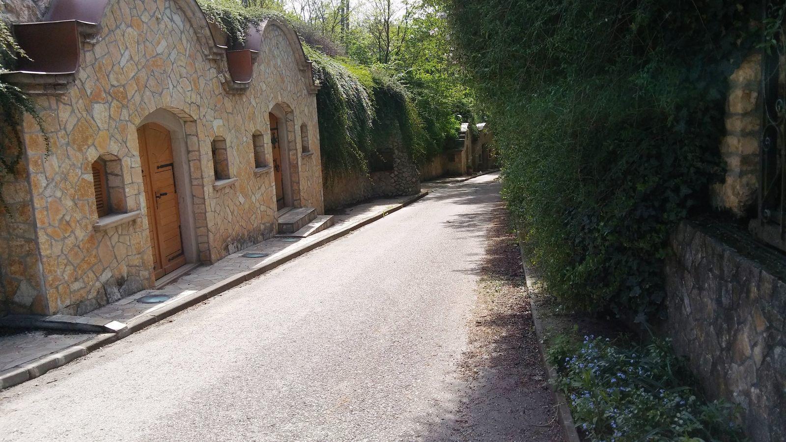 A kilátóhoz vezető utak egyike a nyúl pincesor előtt halad