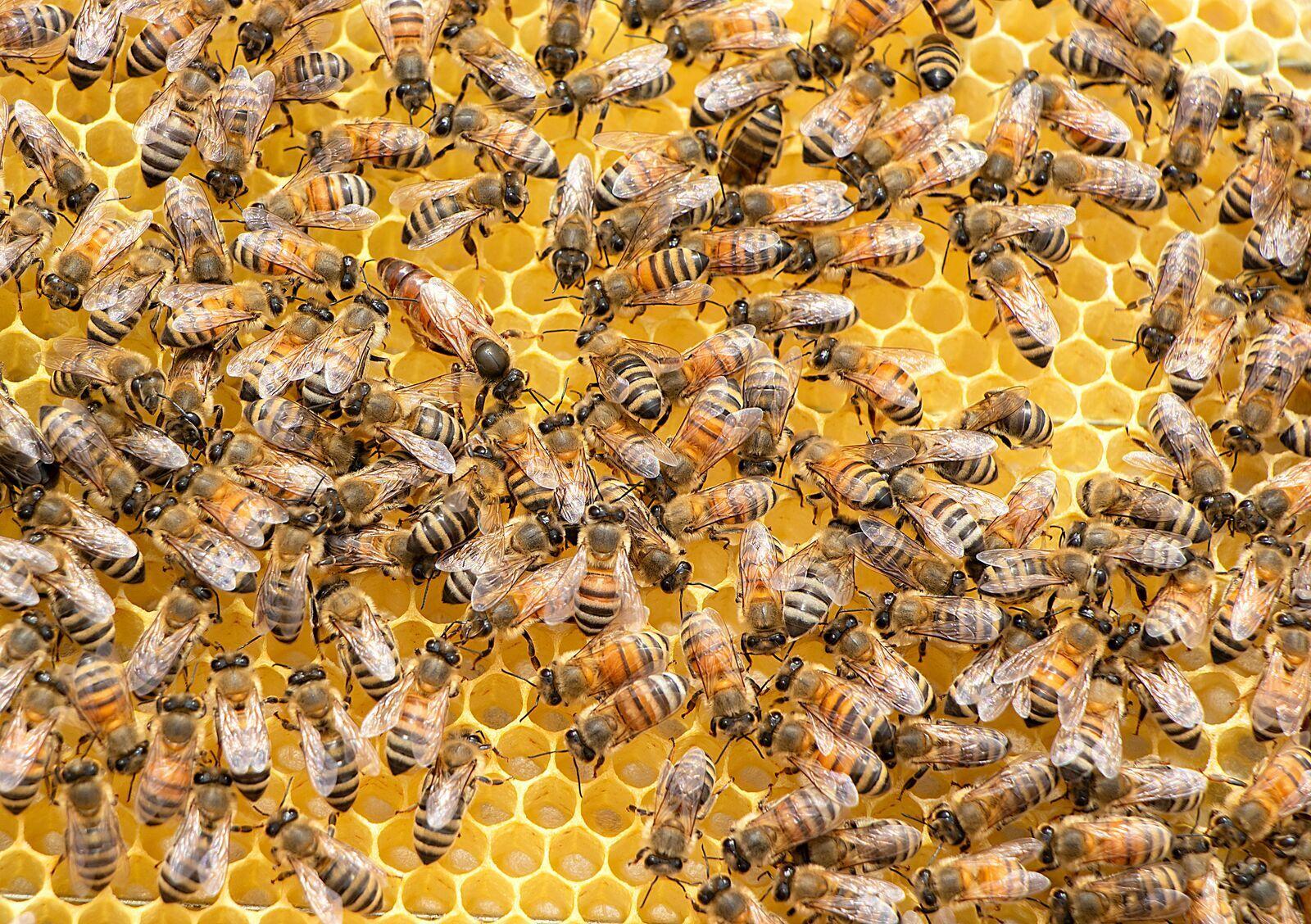 a méhek online keresnek pénzt