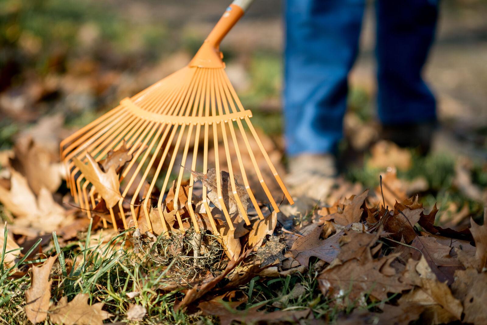 Szeptemberi kertészeti teendők