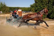 A hétéves lovak versenyében világbajnok lett a német ENFADO P, szász-thüringiai pej herélt, hajtója Jovanca Marie KESSLER.