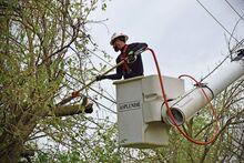 A légkábelek kiszabadítása nem egyenlő a szakszerű metszéssel