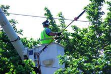 Ha rendszeresen alakítjuk a fákat, akkor nem kell később nagyobb beavatkozásra sort keríteni