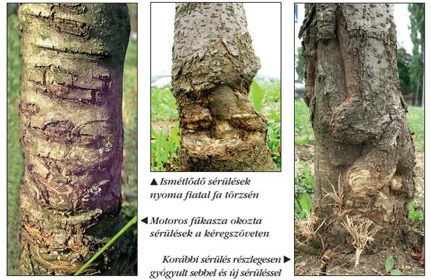 Rák a fákon, A rák kialakulását befolyásoló tényezők