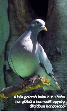 öko vékony galamb si trova személyre szabott étrend online