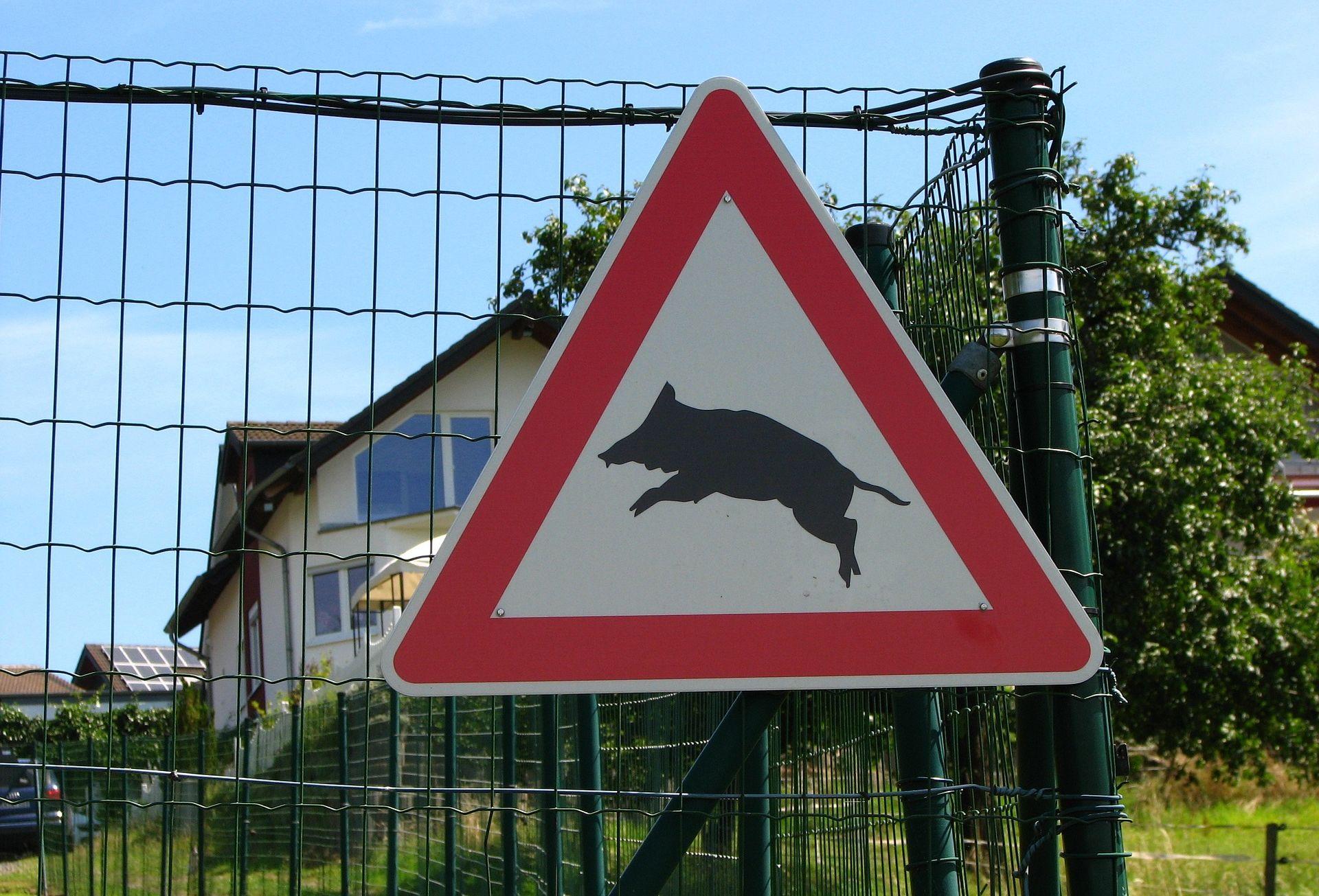 """Képtalálat a következőre: """"vaddisznó veszély tábla"""""""