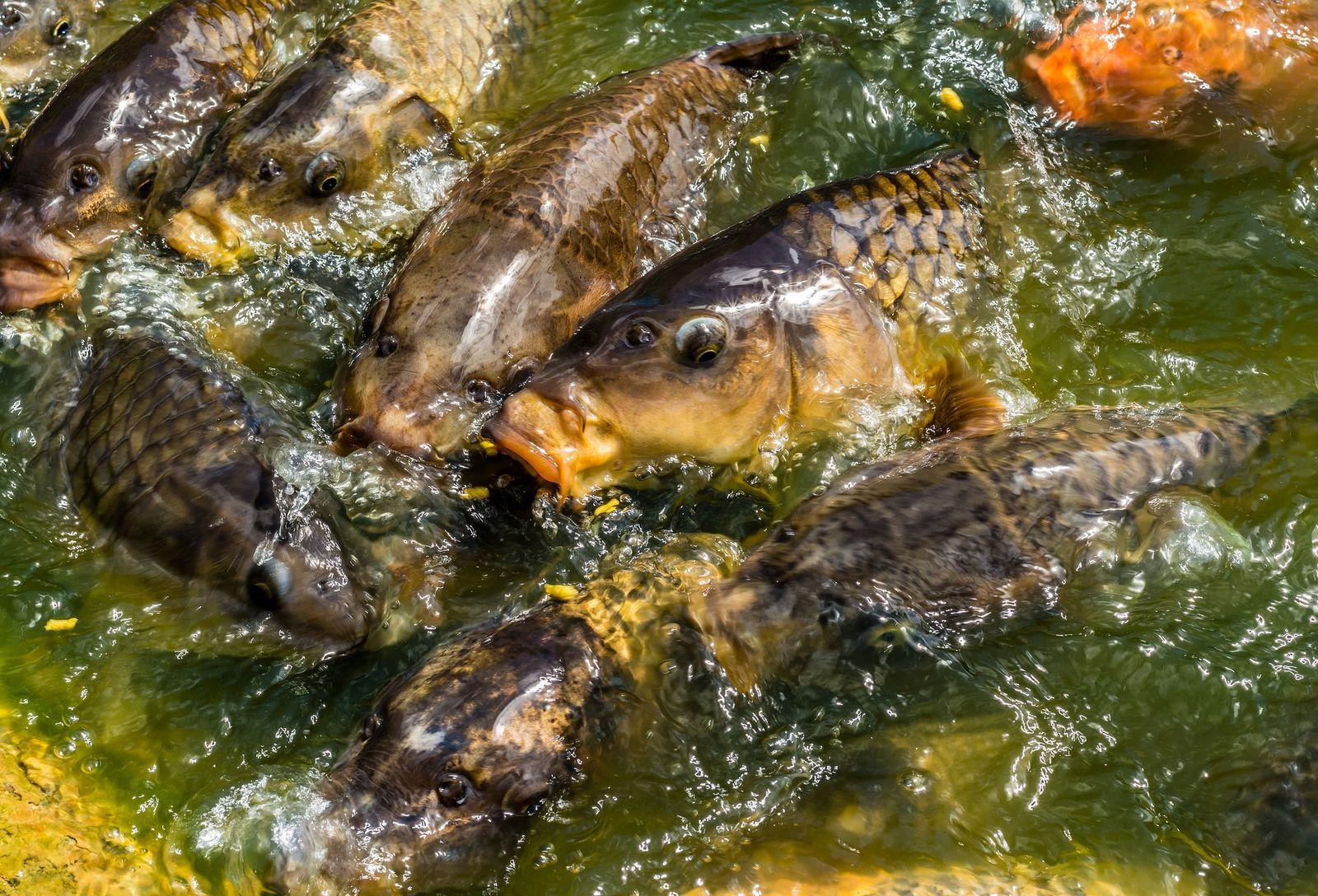 Rengeteg hal egyeztetés