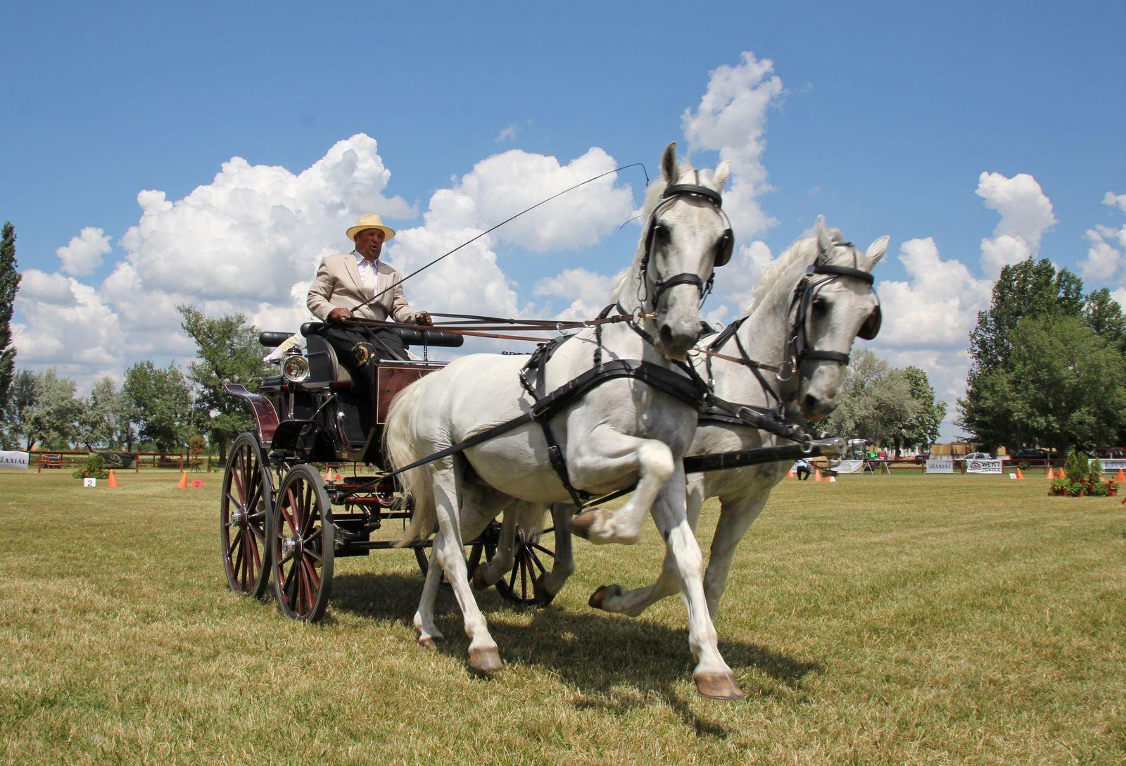 segítsen a lovasnak a fogyásban