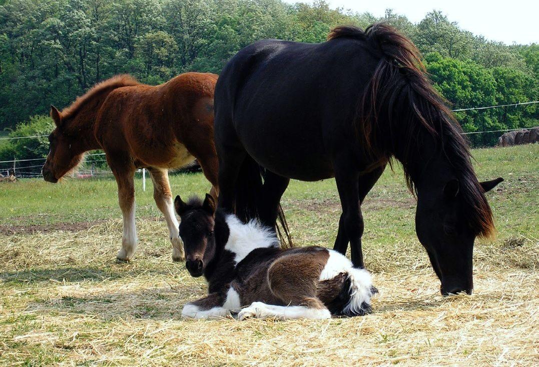 közös kezelés a lovak számára