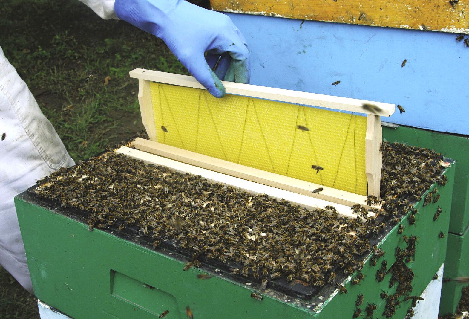 méhészeti termékek és jövőkép étel a szemlátás javítására